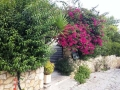 Vila Iris Agios Nikitas Apartmani na Lefkadi (14)
