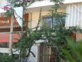 Vila Orisomo Pefkohori (4)